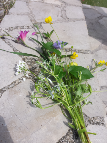 CI fleurs